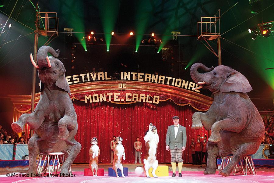Zirkusfestival_Elefanten-Hunde